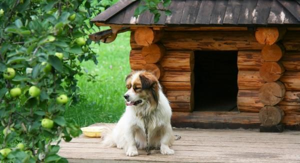 Zanimive ideje za pse Kennel