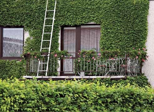 Hedge sprednja okna