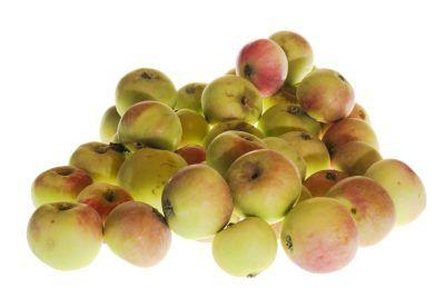 Какова урожайность сорта яблонь Подарок садоводам