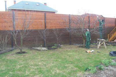 Как ухаживать за яблонями Подарок садоводам