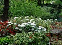 Японский сад кайзерслаутерн: кусочек японии в европе