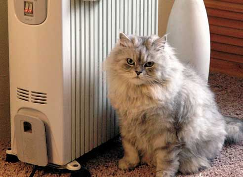 Cat na radiatorju