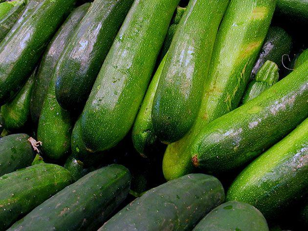 Овощ кабачок – выращивание