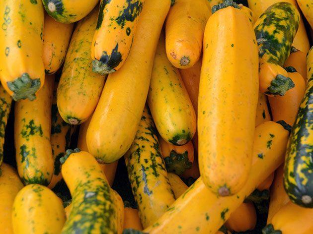 Желтые кабачки – выращивание на участке