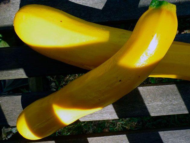 Плоды желтого кабачка