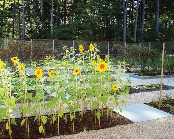 Kako prilagoditi geometrično vrt pod majhnim obližem