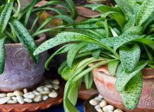 Как домашние растения помогают нашему здоровью