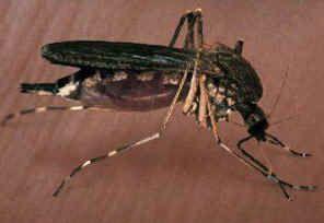 Как да избегнем ухапване насекоми в градината