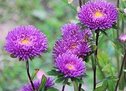 nebine cvetijo