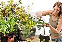 Как размножать комнатные растения?