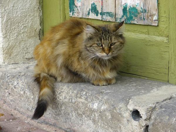 Изгубена котка може да изглежда за домакини - да им помогне да се срещнат