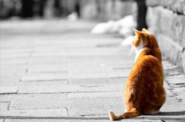 Нека всеки самотен котка ще има нов дом