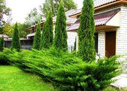 Ландшафтный дизайн дачи с хвойными растениями
