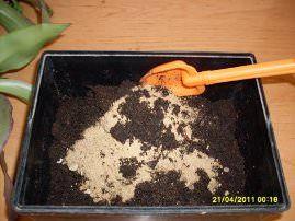 Pripremite mješavinu tla za kallizii