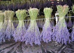 Kako, da se posuši svoje cvetje in podaljšali njihovo lepoto?