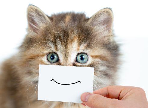 кот, котенок, улыбка, животное