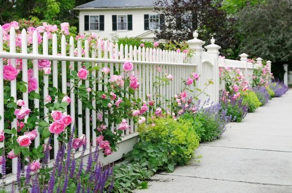 Как украсить забор на даче