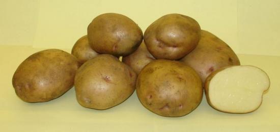 Kako izbrati krompir sadilni material?