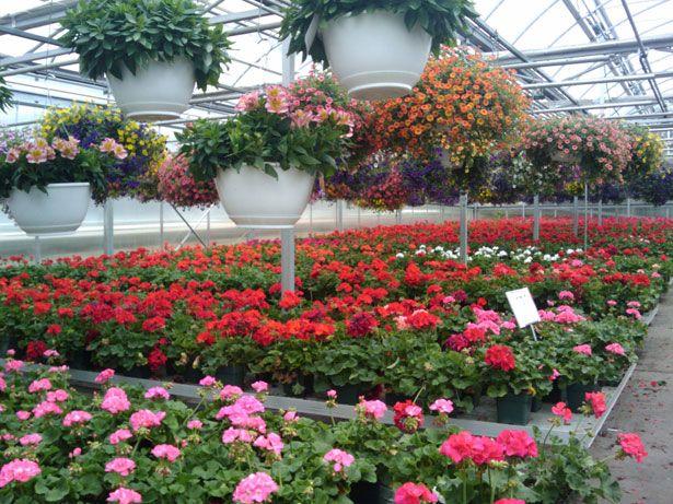 Теплица для цветов