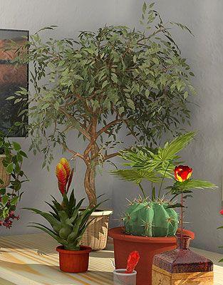 Как вырастить комнатное растение из семян?