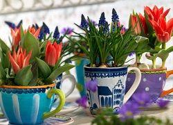 Kako rastu tulipani u kući za odmor?
