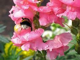 Какви цветя като насекоми