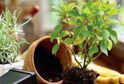 Co by mělo být odtok pro pokojové rostliny?