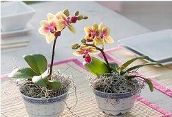Как организовать уход за орхидеями?