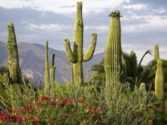 Kaktus na internetu: zanimivih dejstev o kaktusov na svetovnem spletu