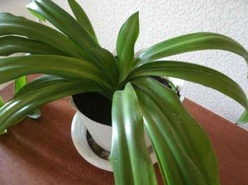 Какую функцию выполняет хлорофилл в растениях