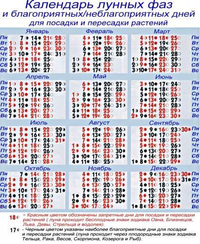 Setveni koledar za sobne rastline in kako saksiju obrat