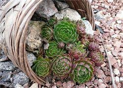 Эффектные почвопокровные многолетники в дизайне сада