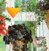Камнеломка комнатная.выращивание и уход