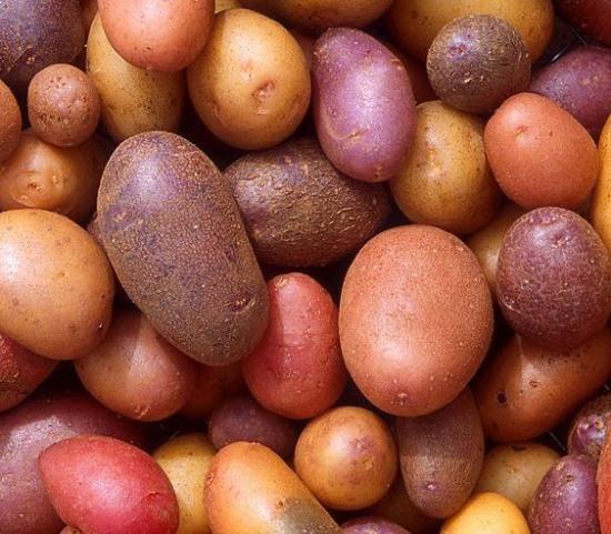 Alvar krompir in njeno gojenje