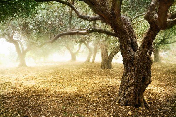 Kaznovanje ali odpusti? Mi odločamo o usodi starega vrta