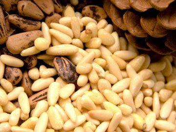 Кедровые орехи фото и описание