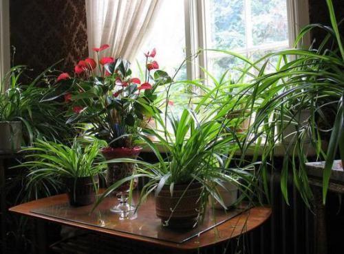 Кислород для комнатных растений: необходимое условие жизни