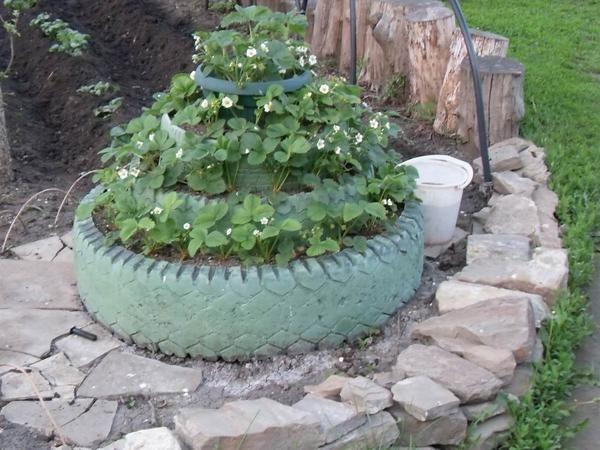 Flowerbed tier pnevmatike