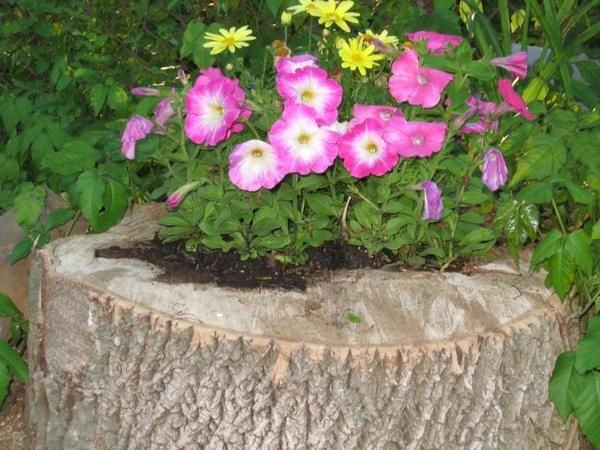 Flowerbed v drevesni štor
