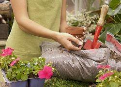Kdaj in kaj je potrebno gnojiti rože?