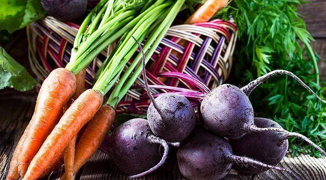 морковь со свеклой