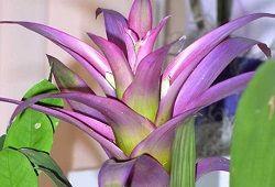 Lončnice cvetoče eksotične rastline za fitosanitarna
