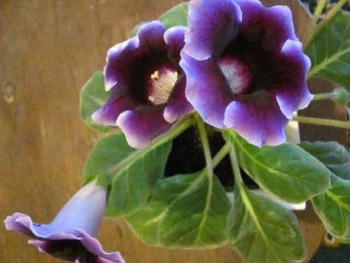 Hrnkové rostliny pěstované ze semen