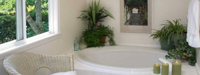 Комнатные растения для ванной комнаты