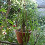 Комнатные растения на улице