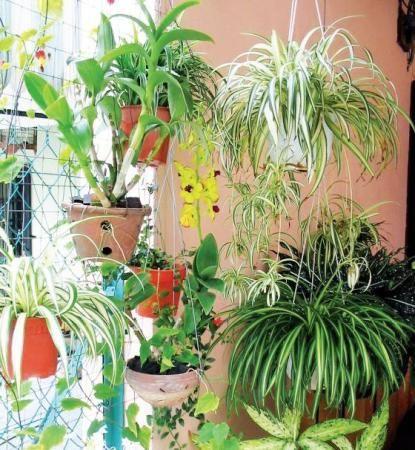 Комнатные растения нужны не только для красоты, но и для здоровья