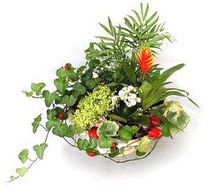 Kompozice hrnkové rostliny