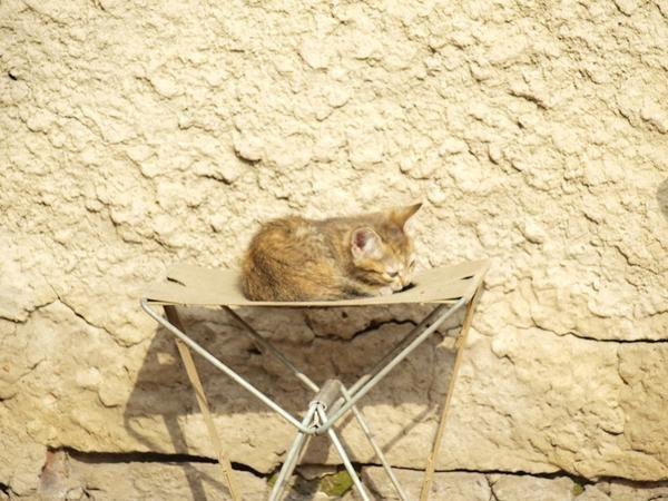 котейка на стуле