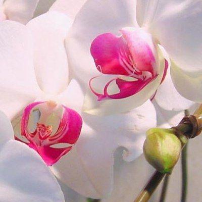 Уход за орхидеями: основные правила и возможные проблемы