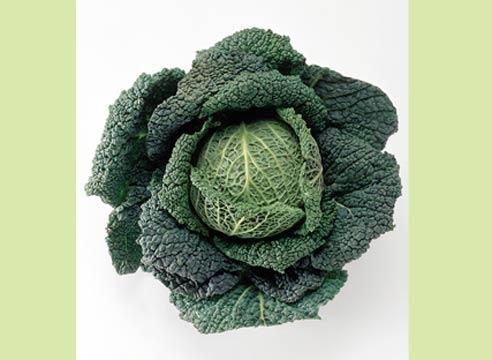 Ohrovt, Brassica oleracea convar.capita